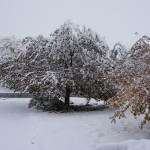4 days later - Trees didn't like early snow on the 26th