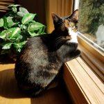 Mayzie gazing at the birds